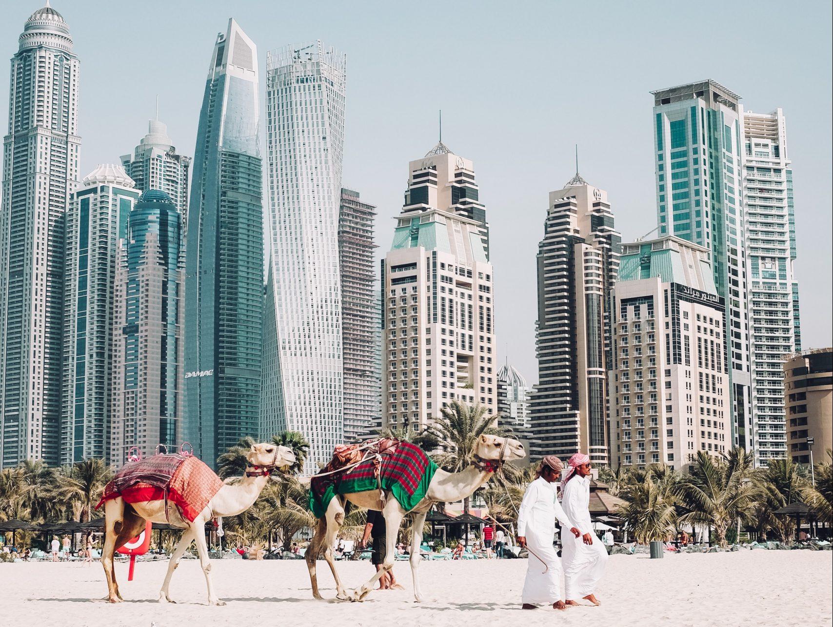 widok z Dubaju - 2 meżczyzn, dwa wielbłądy na tle palm i drapaczy chmur